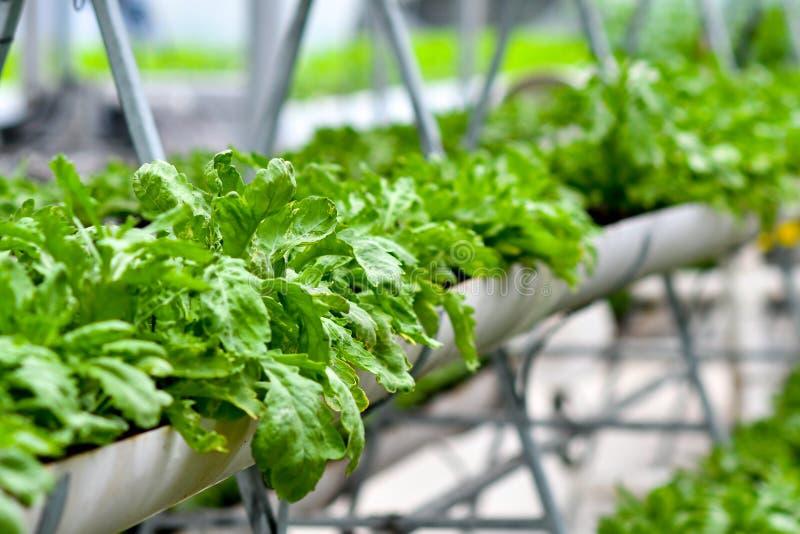 Urban agriculture, urban farming, or urban gardening royalty free stock images