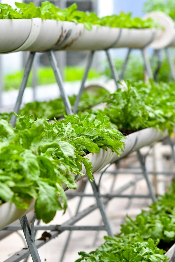 Urban agriculture, urban farming, or urban gardening royalty free stock photo