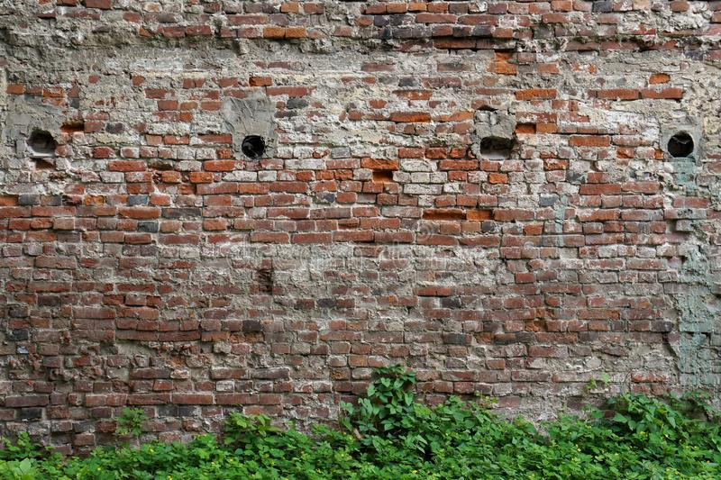 Close-up view of the old ruined red brick wall with green grass at the bottom stock images