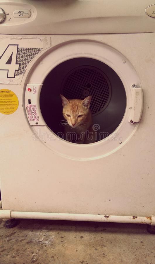 Urban Cat's Den. stock image