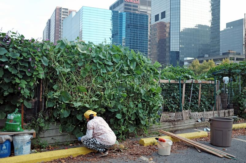 Urban community garden in downtown Cleveland, Ohio, USA. stock photography