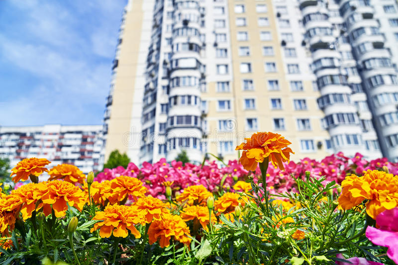 Urban flowers with high dwelling building stock photography