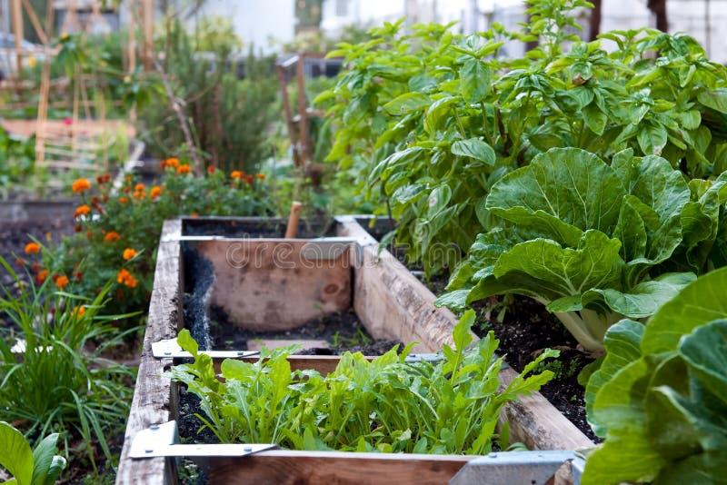 Urban Garden royalty free stock image