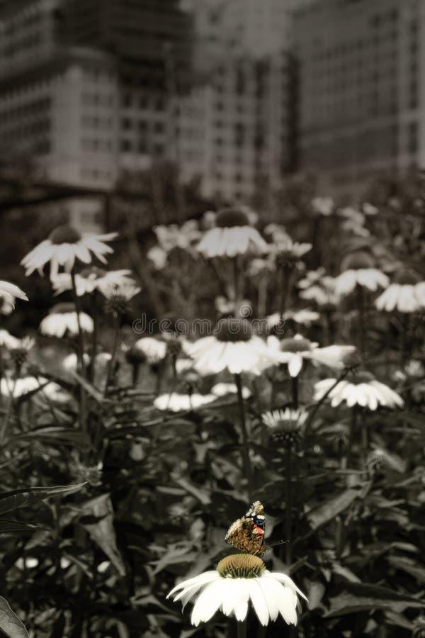 Free Urban Garden Royalty Free Stock Images - 8359229