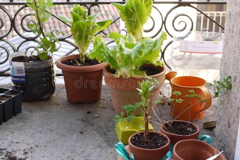 Urban garden royalty free stock images
