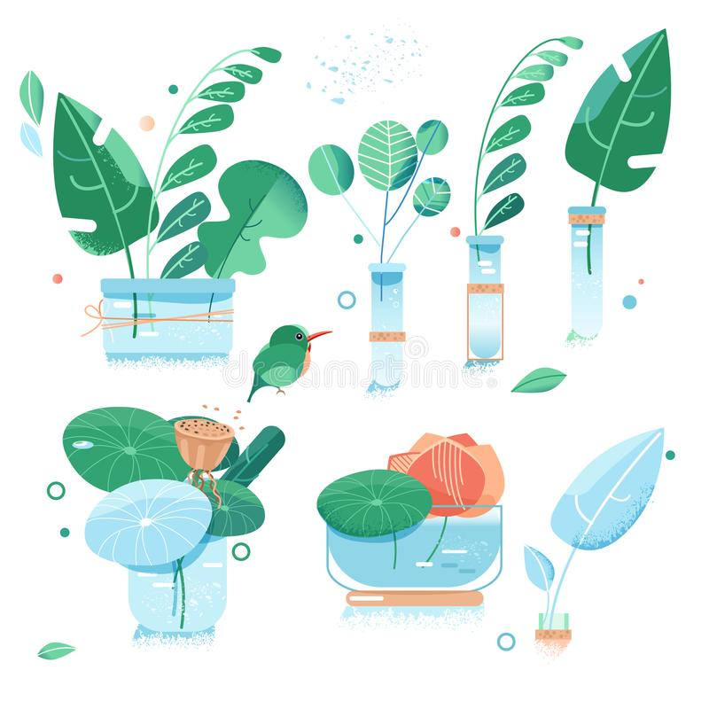 Urban garden. plants in jars and bottles. house plants and flowers in pots. green leaves of exotic plants. greens and vector illustration