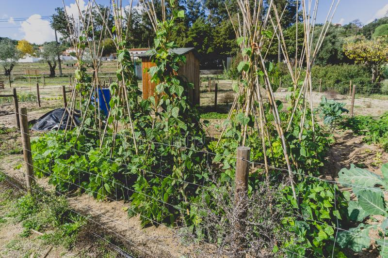 Urban gardening. City urbanized vegetable garden. Growing, farming vegetables in the city. Agriculture of organic hand grown food royalty free stock images