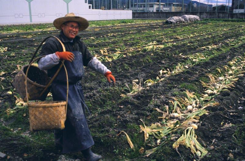 Urban Gardening in Japan royalty free stock images