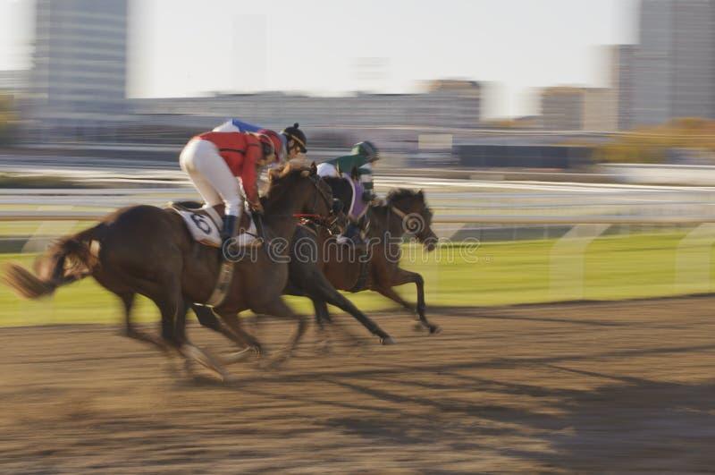 Urban horse race royalty free stock photography