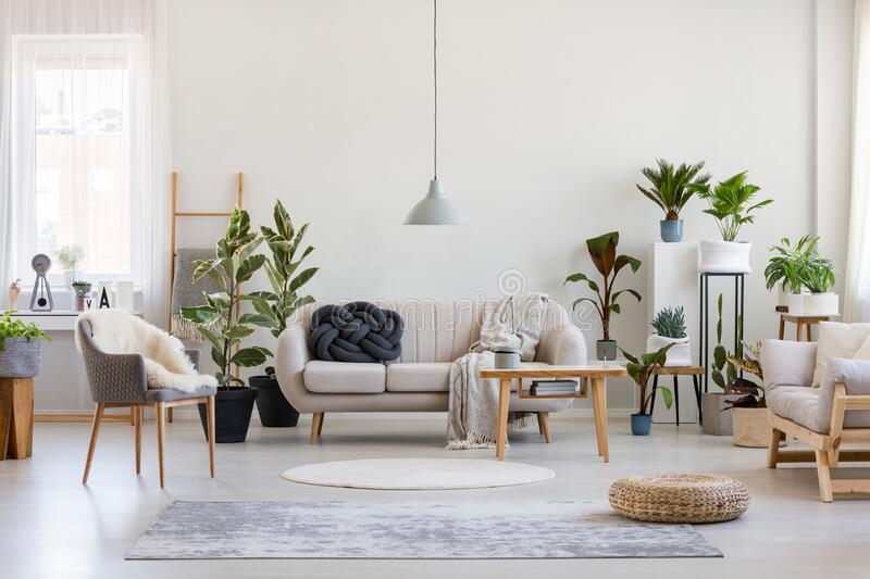 Urban jungle in trendy living room interior with white couch with black knot pillow and wooden furniture, copy space on empty wall. Urban jungle in trendy living stock photography