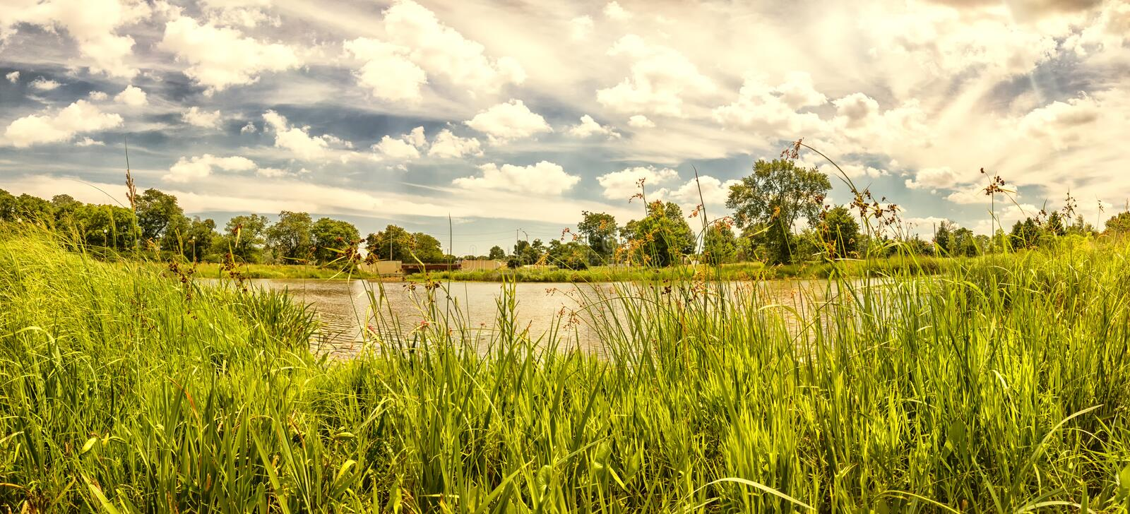 Urban Lagoon and Nature Preserve. Chicago, USA. Summer landscape. royalty free stock photos