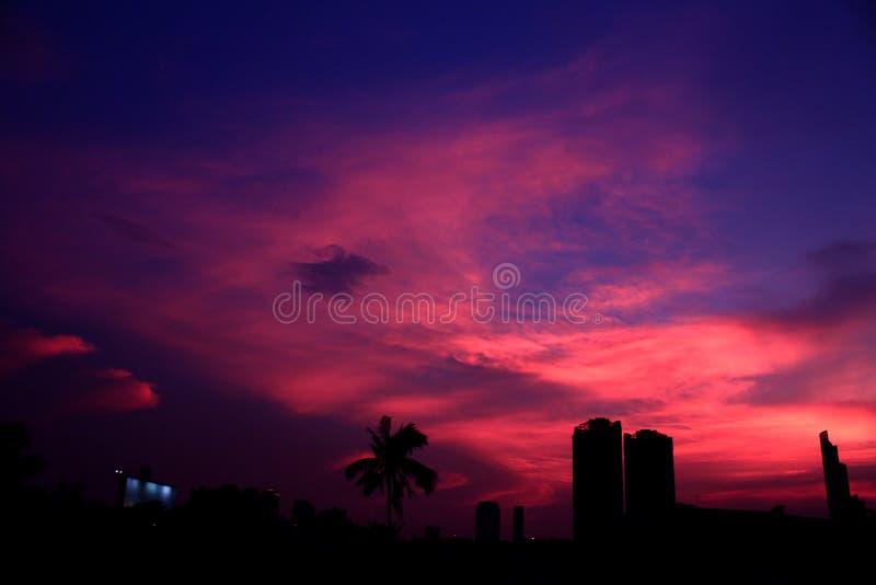 Urban Landscape City Palm Trees Sky Scrapers Dusk. Background Purple Pink Buildings Horizon royalty free stock image