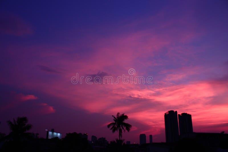 Urban Landscape City Palm Trees Sky Scrapers Dusk. Background Purple Pink Buildings Horizon stock photos