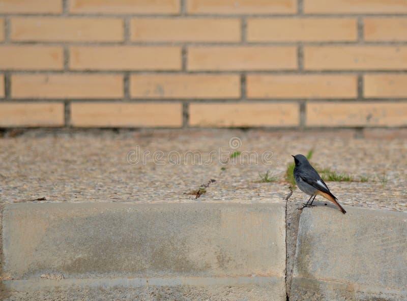 Urban Little Bird Royalty Free Stock Photo