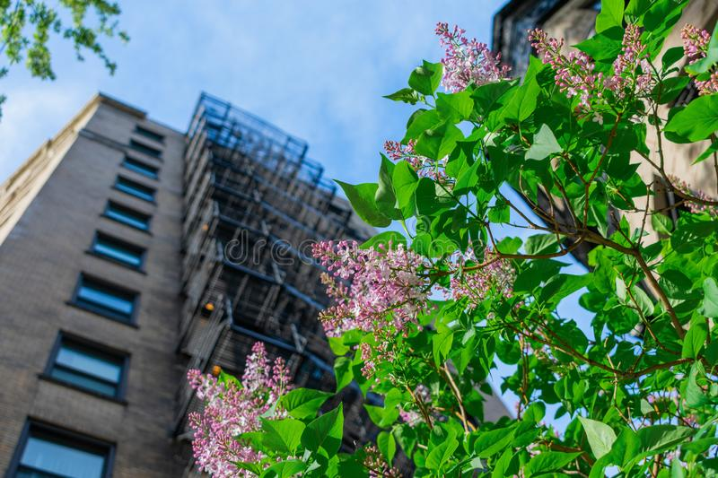Urban nature in Chicago stock photos