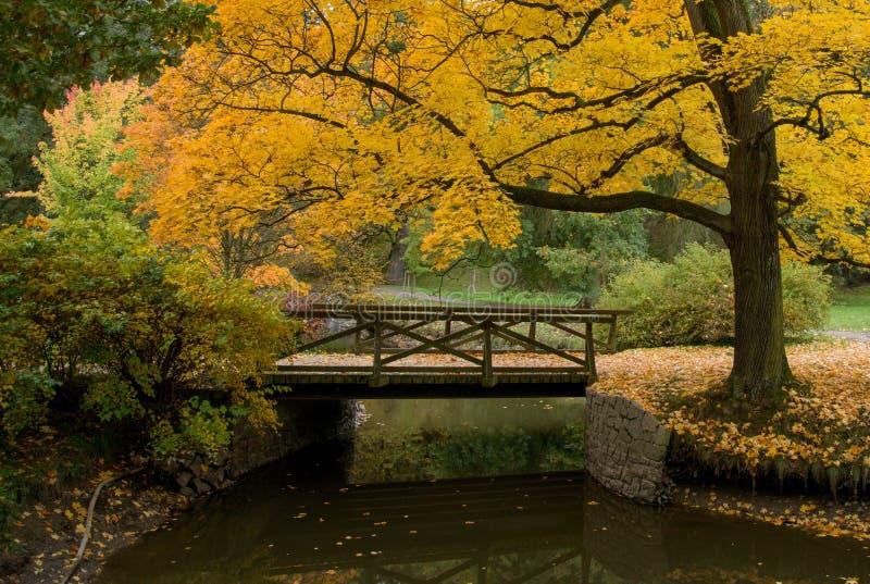 Urban park in autumn colours stock image