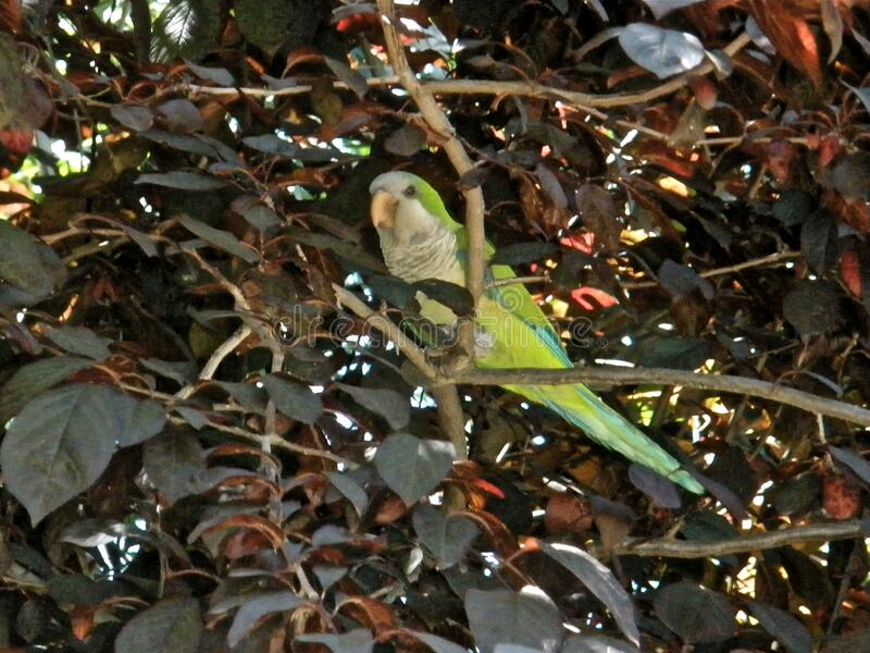 Urban Parrot Free Public Domain Cc0 Image