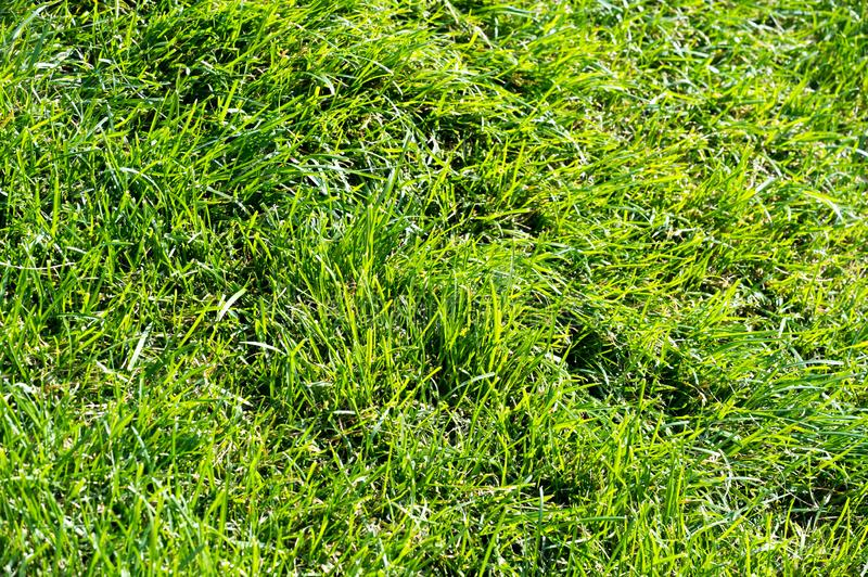 Urban photography, A lawn is an area of soil-covered land planted with grasses and other durable plants. Urban photography, A lawn is an area of soil-covered stock photography