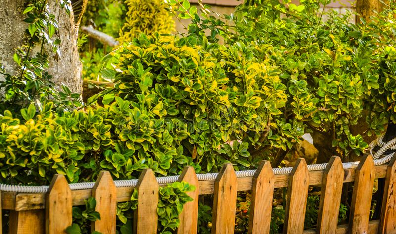 Urban Plants And Vegetation In Local Park stock photography