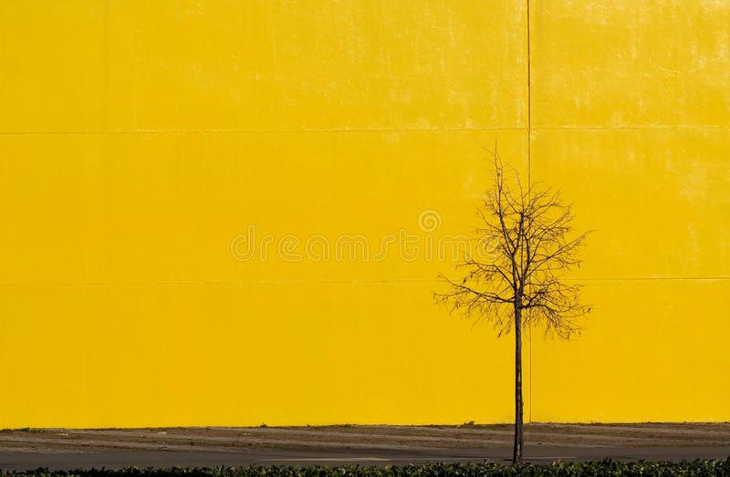 Urban street background for copy space. Bright yellow concrete wall with a street and a small bare tree royalty free stock images