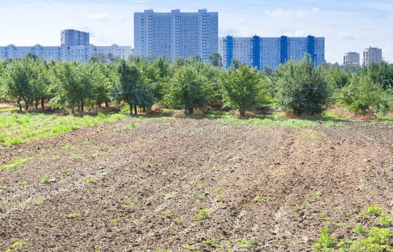 Urban trädgård i sommardag royaltyfria foton