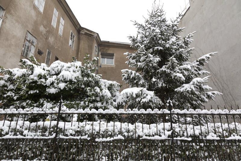 Urban trädgård i vintertiden arkivfoton