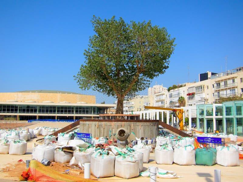 Urban Tree royalty free stock photos