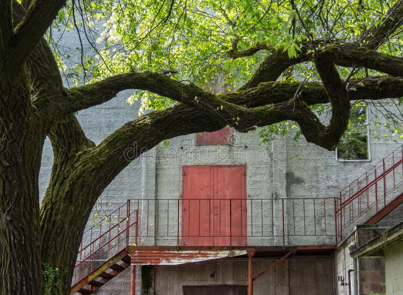 Urban tree. Tree brightens up urban setting stock photography