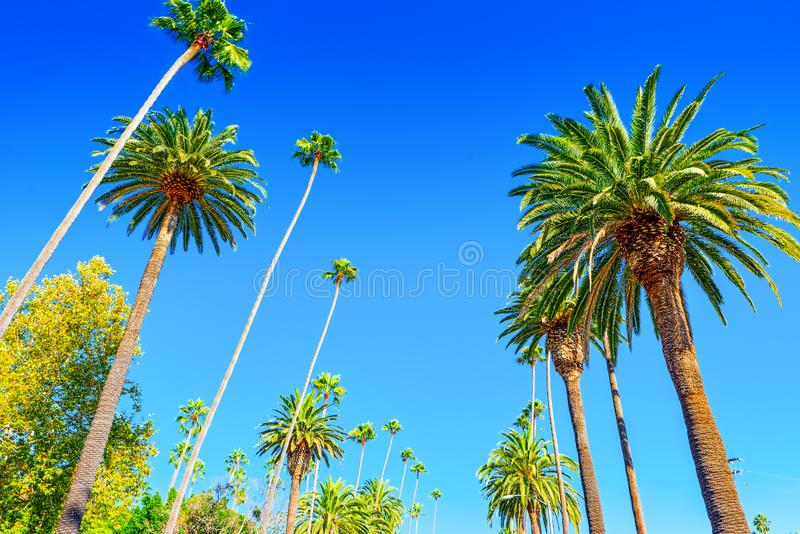 Urban views of the Beverly Hills area and residential buildings on the Hollywood hills. California. USA stock photos