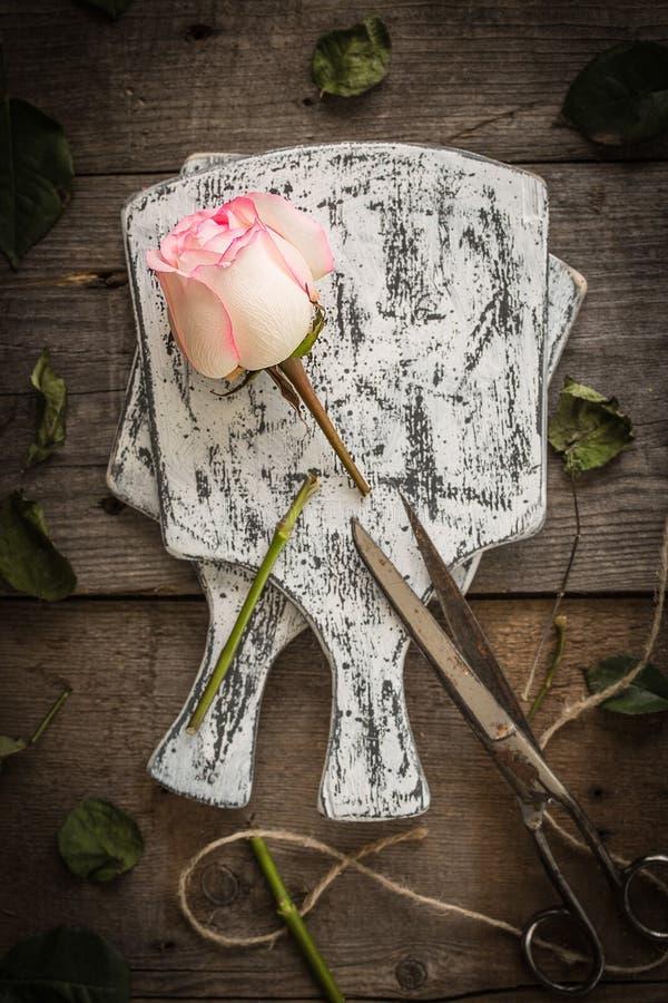 Urblekt rosa ros på mörk lantlig bakgrund arkivfoton