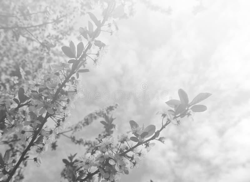 Urblekt vårbakgrund i svartvitt royaltyfri bild