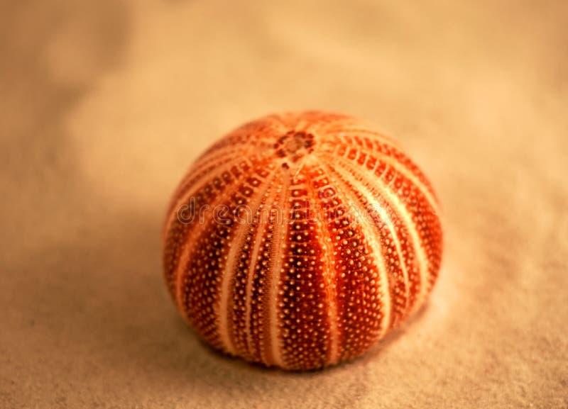 Urchin stock photos