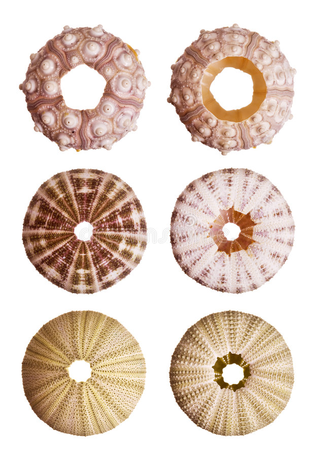 Urchin stock images