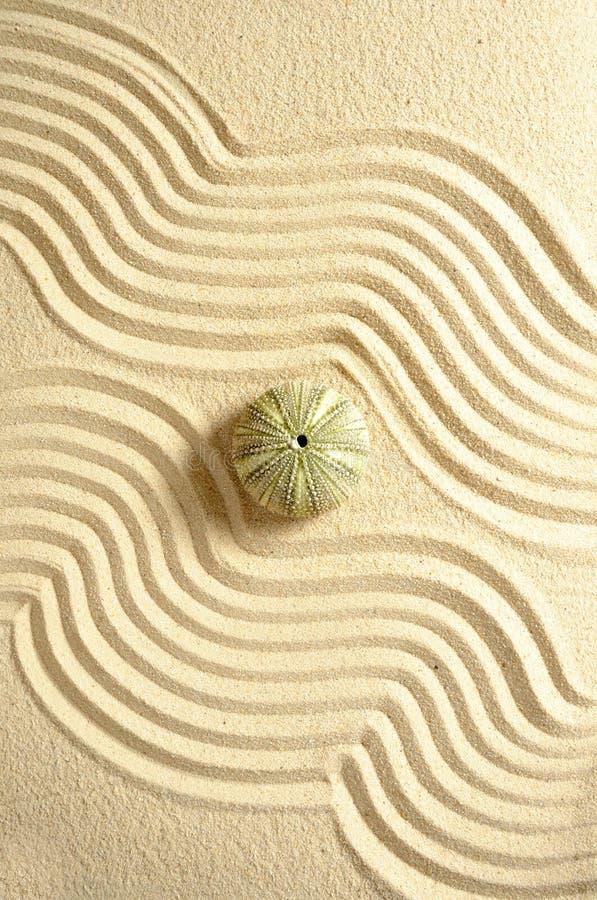 Urchin in sand stock photos