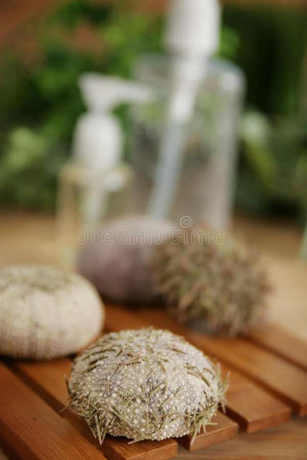 Download Urchins Royalty Free Stock Photography - Image: 12451907