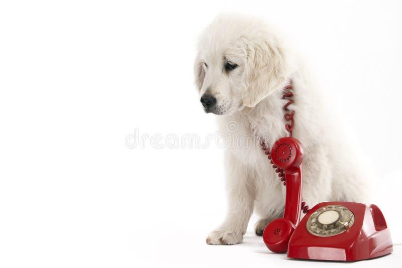 Urgent call stock photography