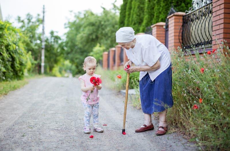 Urgroßmutter- und Kleinkindmädchen, das Blumen in der Landschaft auswählt lizenzfreies stockfoto