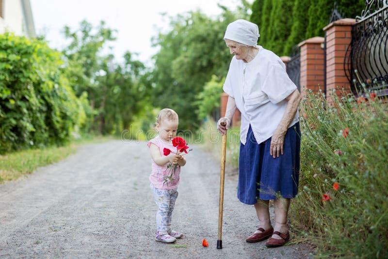 Urgroßmutter- und Kleinkindmädchen, das Blumen in der Landschaft auswählt stockfoto