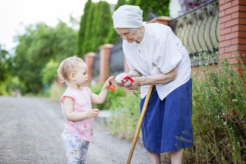 Urgroßmutter- und Kleinkindmädchensammeln-Mohnblumenblumen stockbilder