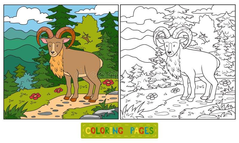 (Urial) färgläggningbok, vektor illustrationer