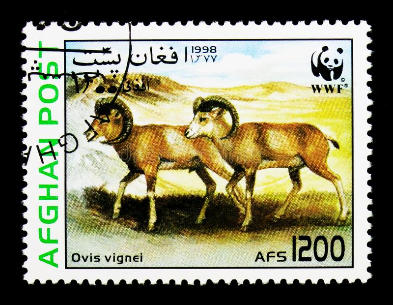 Urial (Ovis orientalis vignei), WWF - Wild sheep serie, circa 19. MOSCOW, RUSSIA - DECEMBER 21, 2017: A stamp printed in Afghanistan shows Urial (Ovis orientalis royalty free stock images