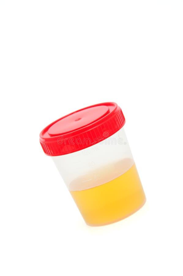 Urina imagens de stock