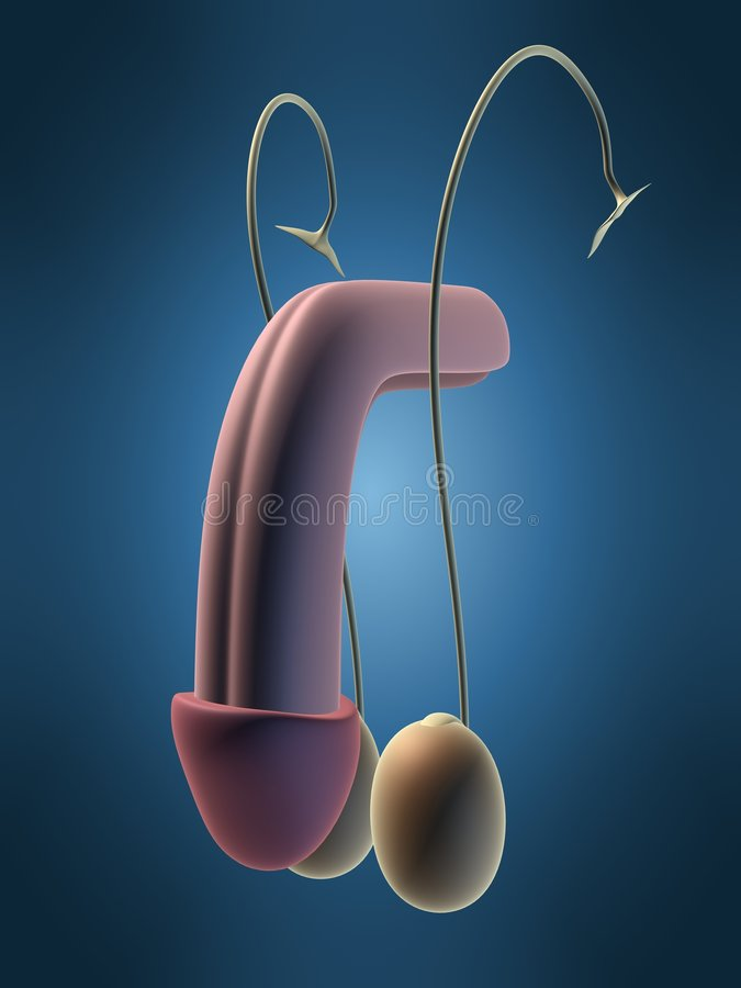 Urinary stock illustration