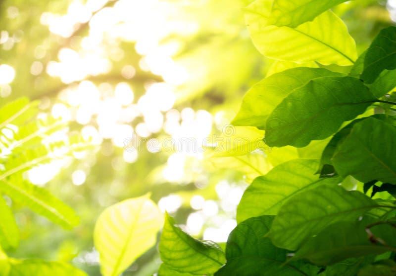 Urlop drzewo przy dżungli tła pogodnym zielonym tropikalnym wybrzeżem, v zdjęcia stock