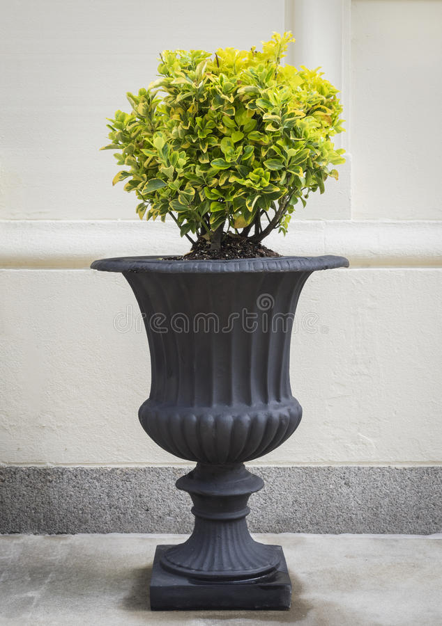 Urna clásica con el Topiary redondo fotografía de archivo libre de regalías
