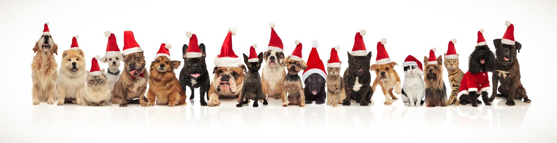 Urocza grupa wiele boże narodzenia migdali być ubranym Santa kapelusze obraz stock