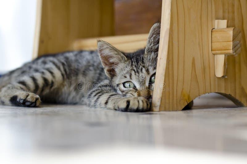 Urocza kot część zdjęcia stock