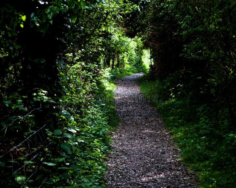 Urocza mała żwir droga przez jaskrawego - zielonego lata lasowe Zielone rośliny i wijąca ścieżka w tropikalnym tropikalnym lesie  obrazy royalty free