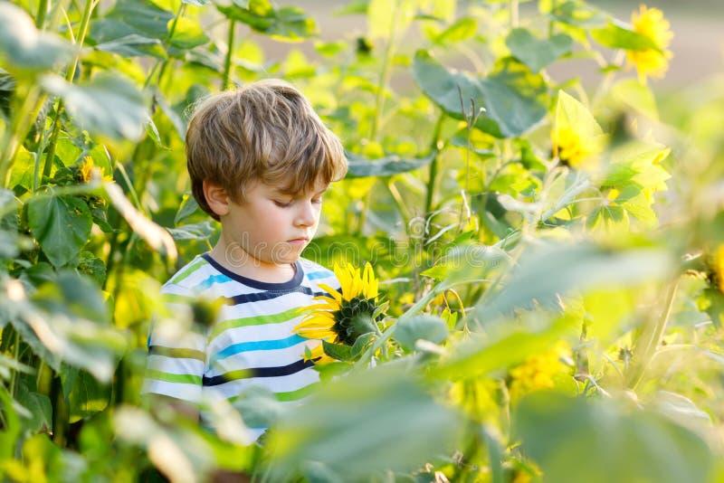 Urocza mała blondynu dzieciaka chłopiec na lato słonecznika polu outdoors Śliczny preschool dziecko ma zabawę na ciepłym lato wie obrazy stock