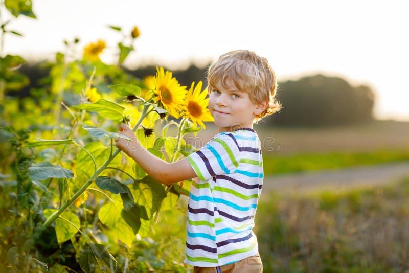Urocza ma?a blondynu dzieciaka ch?opiec na lato s?onecznika polu outdoors ?liczny preschool dziecko ma zabaw? na ciep?ym lato wie zdjęcia stock